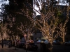 light-tree_jpg-2