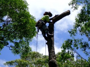 Evergreen tree care are your tree removal and tree care experts in Brisbane